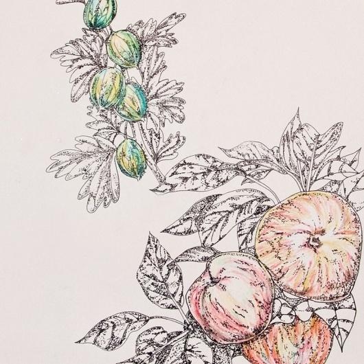 Yuko Sugimoto - Freelance Graphic Designer -Logo, Print, Web, Packaging to Window Display #fruits #drawing #illustration #hand #dot