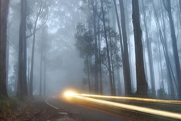 The Journal Portal #light #tree #treet