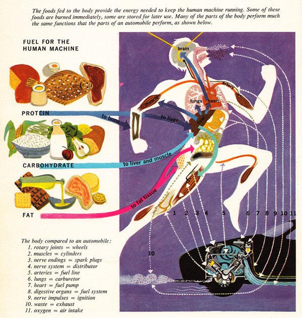 The Human Body: What It Is and How It Works, in Vibrant Vintage Illustrations circa 1959 | Brain Pickings #infographic #retro #anatomy #illustration #vintage