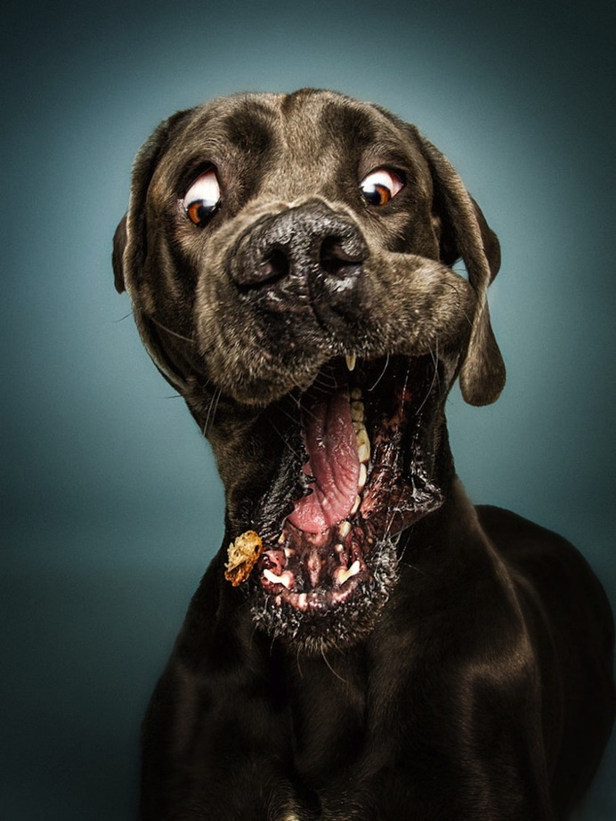 Christian Vieler Captures Hilarious Portraits of Dogs Catching Treats