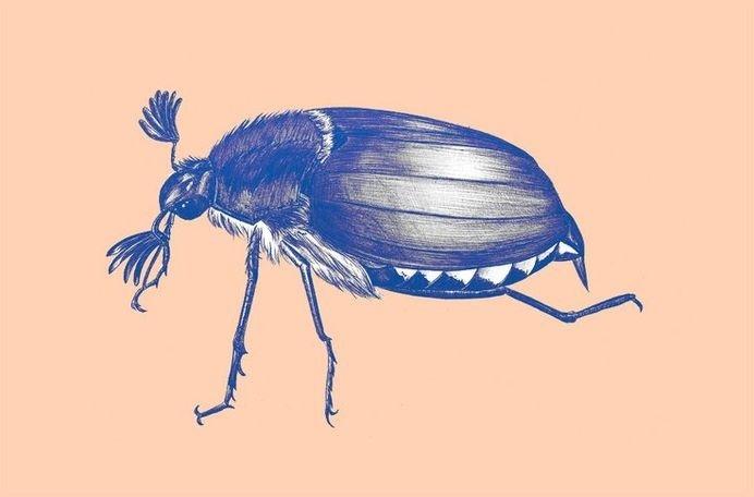 www.larabispinck.com #biro #insects #maybug #illustration #realistic #wings #blue