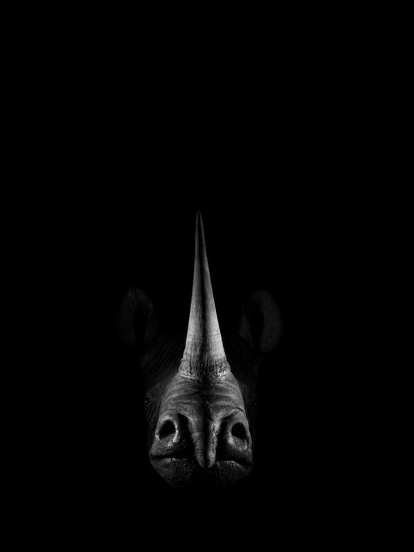 CJWHO ™ (Dramatic Portraits of Animals The American...) #white #dramatic #black #stuffed #photography #portrait #and #animals