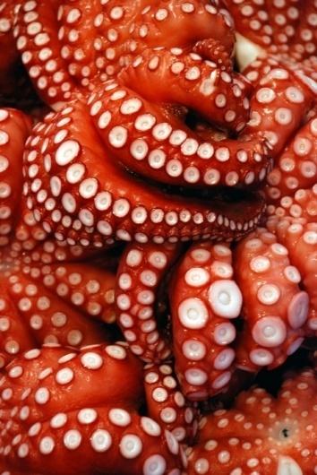 [redthreat] #octopuss