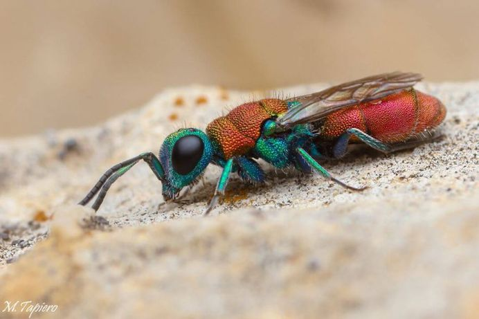 Insanely Detailed Macro Images of Insects by Mev Tapiero
