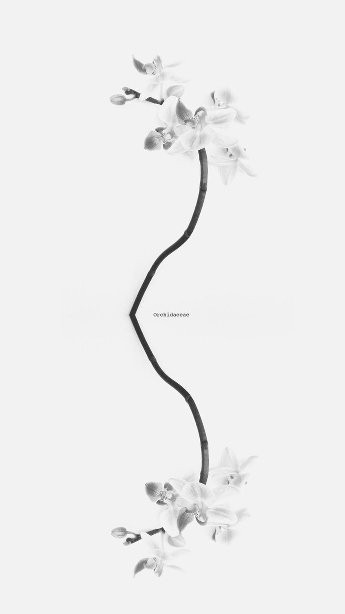 #orchidaceae © [ catrin mackowski ]