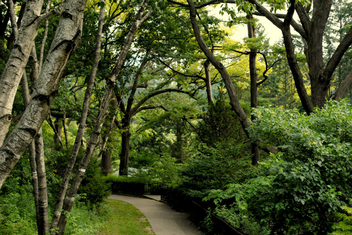 Toronto #nature #green #park #natural #forest #toronto #beauty #canada #photography