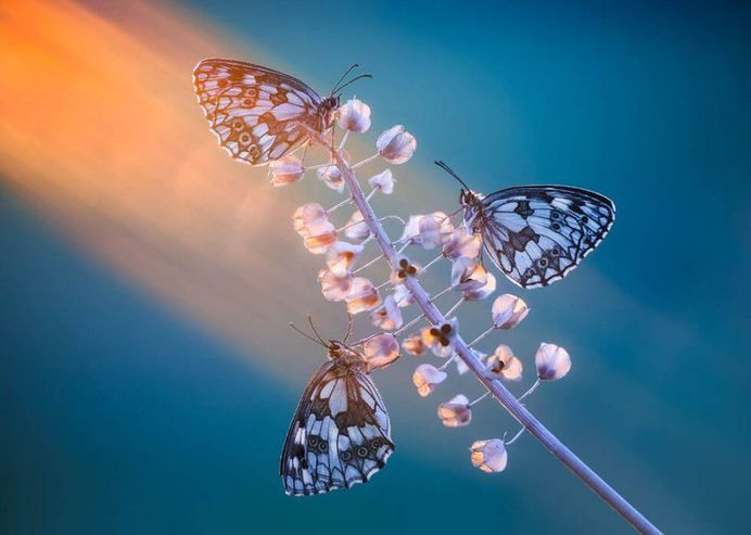 Photonic Bliss V by Petar Sabol