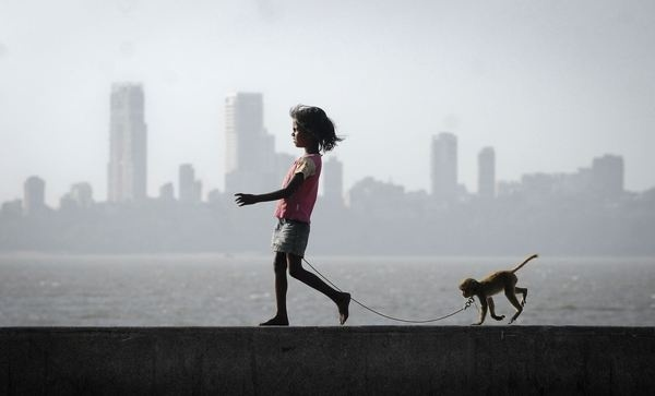 Yahoo! News Latest News #pet #photography #silhouette #monkey