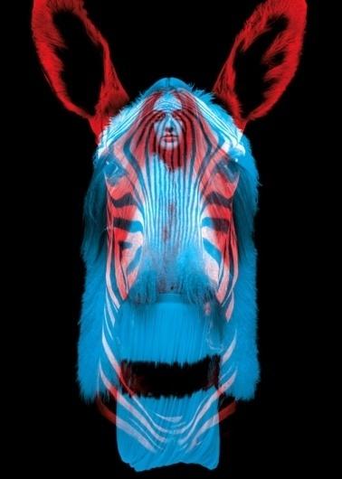 tumblr_l6suk27cLf1qcxitu.jpg (500×700) #photography #graphic #animals