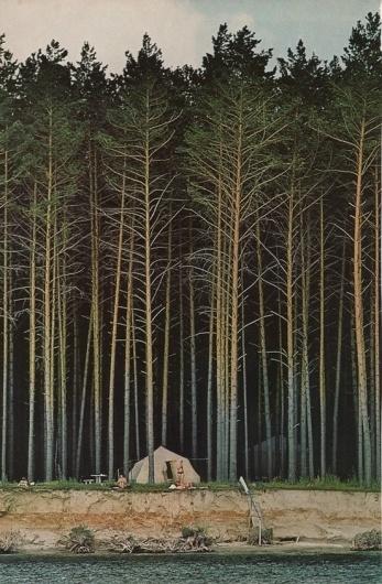 61150507410350890_AhrMA1ib_c.jpg (JPEG Image, 553×843 pixels) #geographic #camping #pine #forest #national