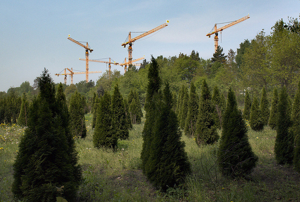 by totaviva #forest #cranes #green