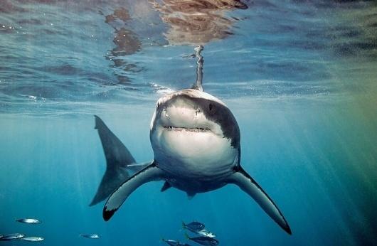 slyAPARTMENT #deep #water #shark
