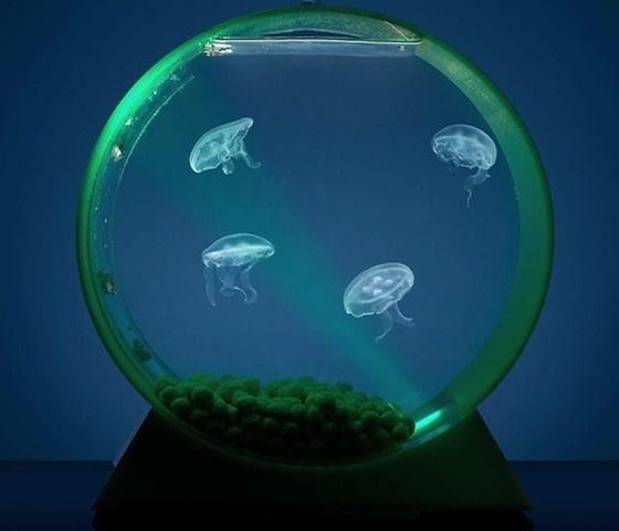 Desktop Jellyfish Tank #home