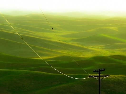 A Picture A Day « These Old Colors #early #bird #landscape #on #wire