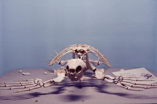 Paul Octavious - Yale Peabody #turtle #skeleton #photography