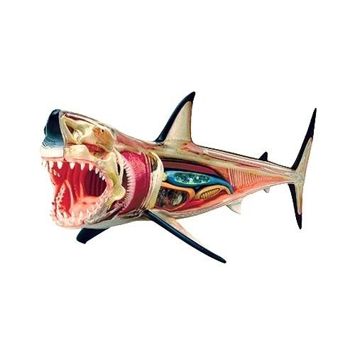http://goodshoppe.wordpress.com/ #shark