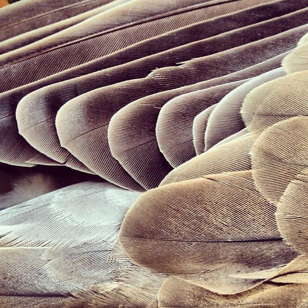 EnikÅ' LÅ'rinczi #lrinczi #feathers #photography #nature #enik