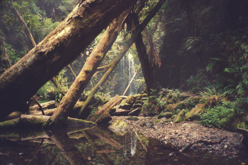 Sleepless Dreams #woods #landscape #path #photography #nature #foliage #lost #forest #trees #logs