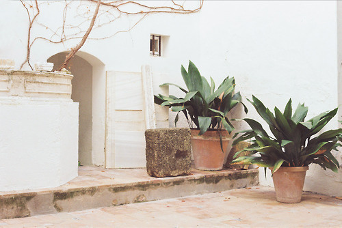 http://modus--vivendi.com/ #spain #white #plants #35mm #seville #interiors #travel #journal #vivendi #photography #andalucian #garden #light #modus