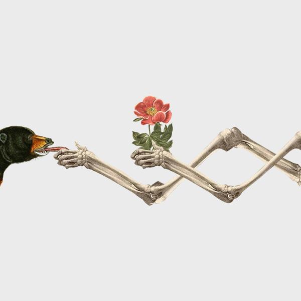 Flora/Fauna #skull #collage #animal #nature