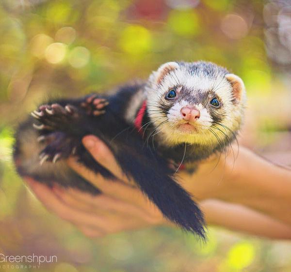 Animal Photography by Alex Greenshpun #inspiration #photography #animal