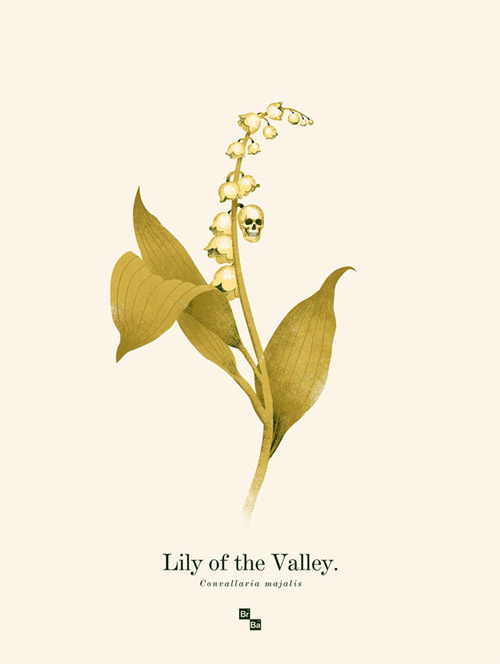 this isn't happiness™ photo caption contains external link #lily #illustration #flower #skull #valley