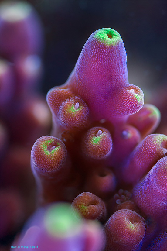 The Exotic Corals And Sponges Photography by Daniel Stoupin #underwater #naturePhoto #Corals