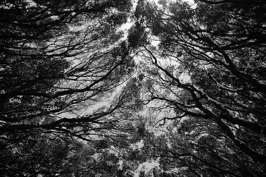 Eerie & Beautiful Photography by Daniel Castañeda I Art Sponge #white #castaeda #black #and #daniel #forest #eerie