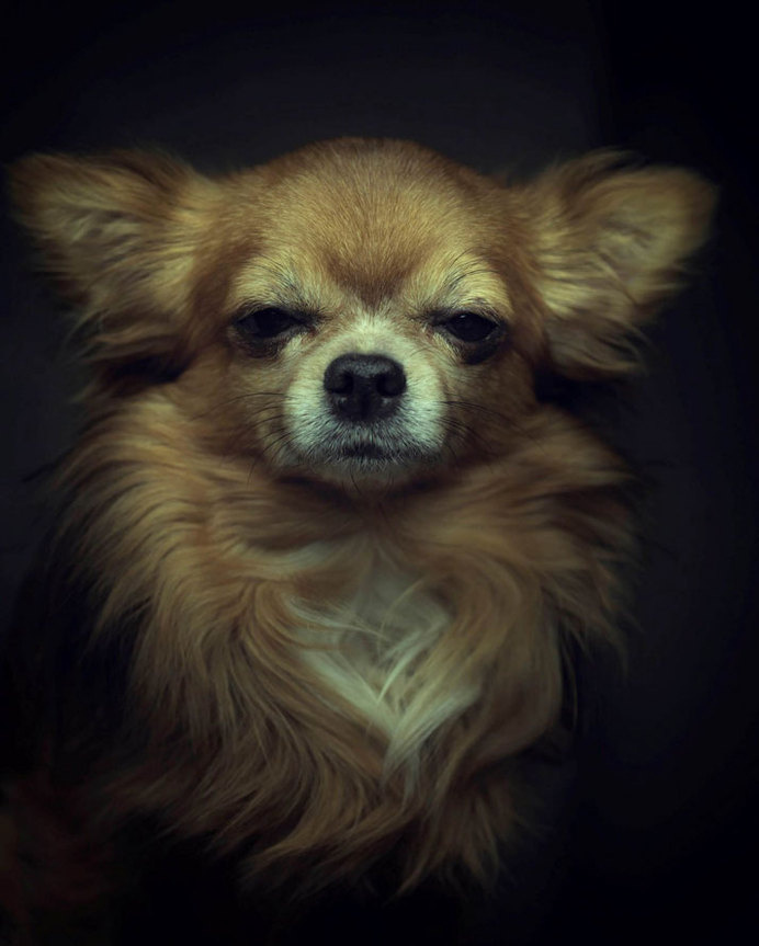 Dramatic Portraits Of Animals Expression Like Human Emotions #animal photography #Cute Dog #Portrait Photography