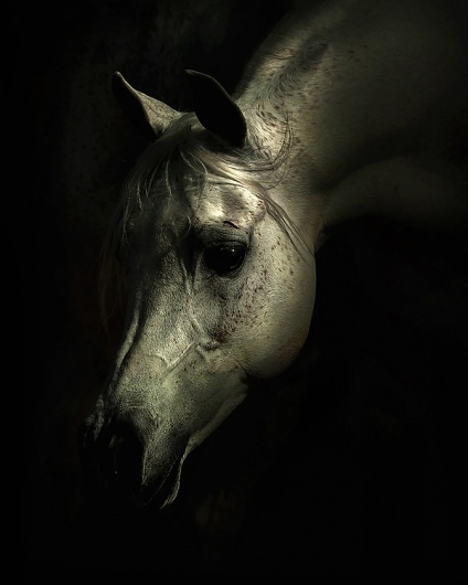 Stunning Horse Photography by Wojtek Kwiatkowski | Abduzeedo | Graphic Design Inspiration and Photoshop Tutorials #photography #horse