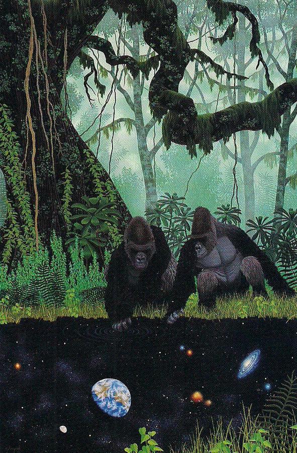 SHAAKA #gorillas