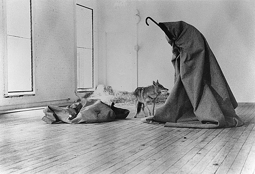 Through everything he does, the coyote demonstrates his utter indifference to the artistic allegory being constructed around him #performance #beuys #photography #wolf #joseph #art
