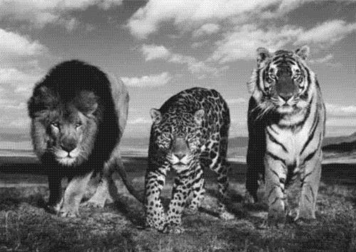 Sucking Starlight Through Our Eyes #wild #leopard #lion #nature #tiger