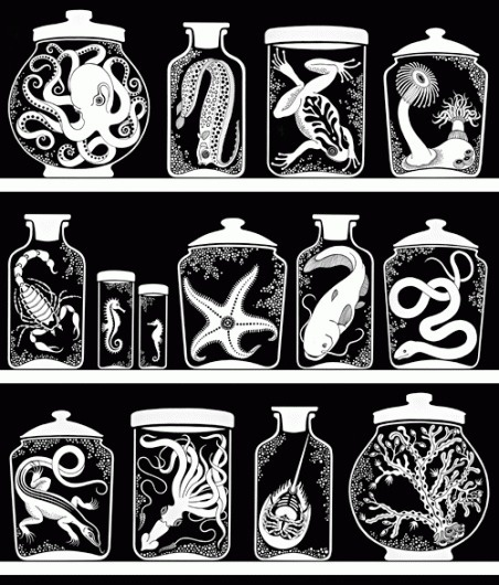 design « sakurasnow #specimen #white #jars #black #illustration #and
