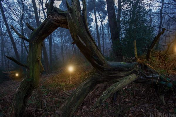Jan Kloke - Misty Forest #kloke #woods #cold #lights #misty #warm #night #jan #mood #forest #light