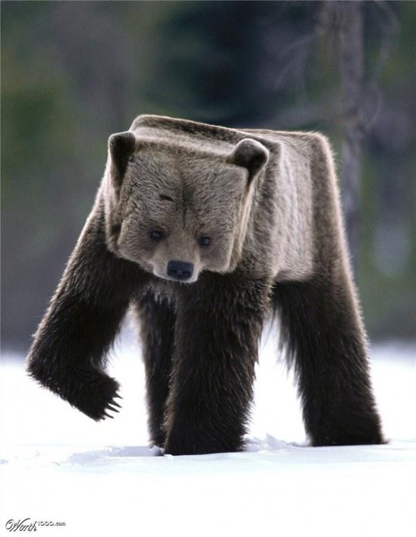 Cubism 30 Creative Photo manipulations #cub #squared #photo #fur #cubism #manipulation #bear