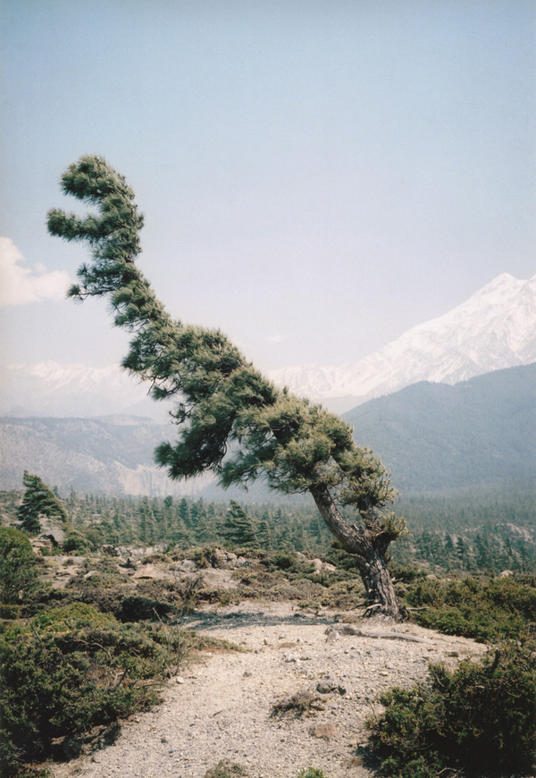 Vincent Delbrouck #wind #himalayas #tree #delbrouck #vincent