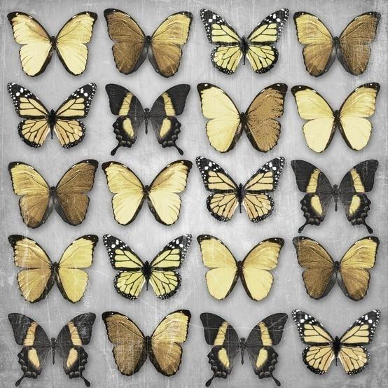 Butterflies #butterfly #nature #golden #gold