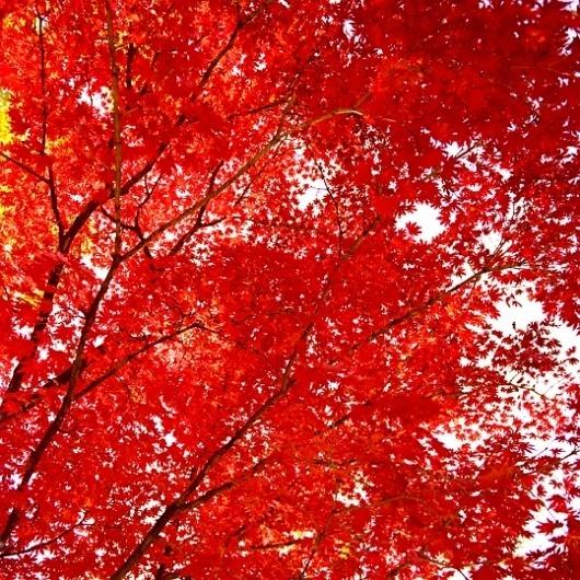 Juliane Eirich : Korea Diary #red