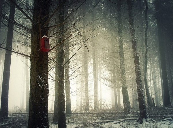 Forest Photography by Bernd Rettig #inspiration #photography #nature