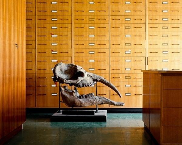 Skeletons in the Closet #skull