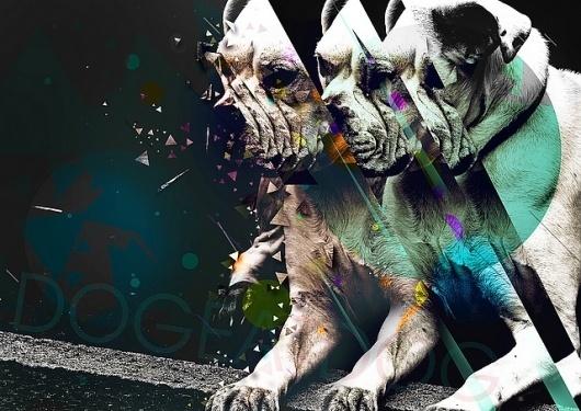 Dog eat Dog | Flickr - Photo Sharing! #pop #color #street #dog