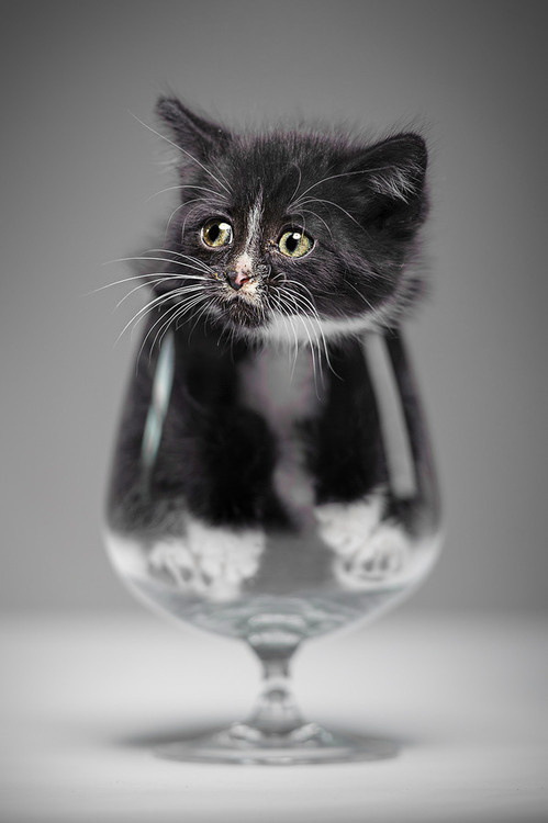 CJWHO ™ (Have a drink? by Denis CJWHO:facebook ...) #kitten #moaw #cat #photography #animals #cute #glas