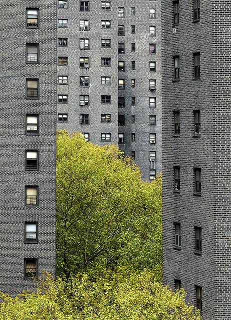 by idogu #trees #buildings #green