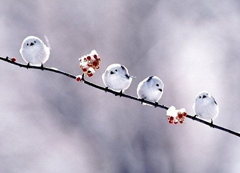 FFFFOUND! | APEDOGS • View topic - LOLCATS (aka post that adorable stuffs) #cute #birds #bird