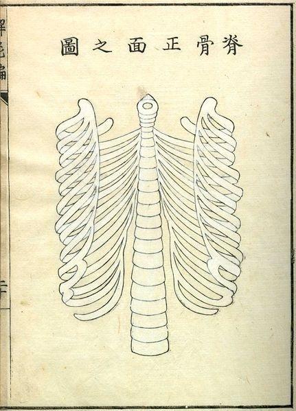Kaishi Hen, an 18th Century Japanese anatomical atlas | The Public Domain Review #anatomy #japan