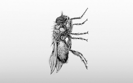 Tundra Blog | The blog of Studio Tundra. Creative inspiration mixed with the everyday. #illustration