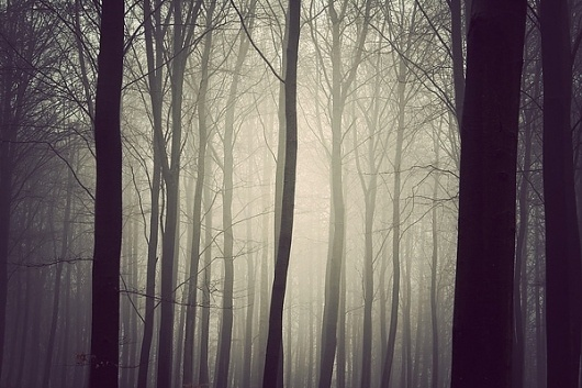 The Trees on the Behance Network #fog #tree #holtermand #kim #photography #nature #forest
