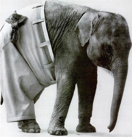 Tutte le dimensioni |sanforized 1963 | Flickr – Condivisione di foto! #photography #animal #elephant
