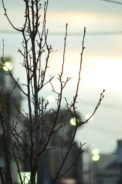 dusk #sky #dusk #photo #lights #branches